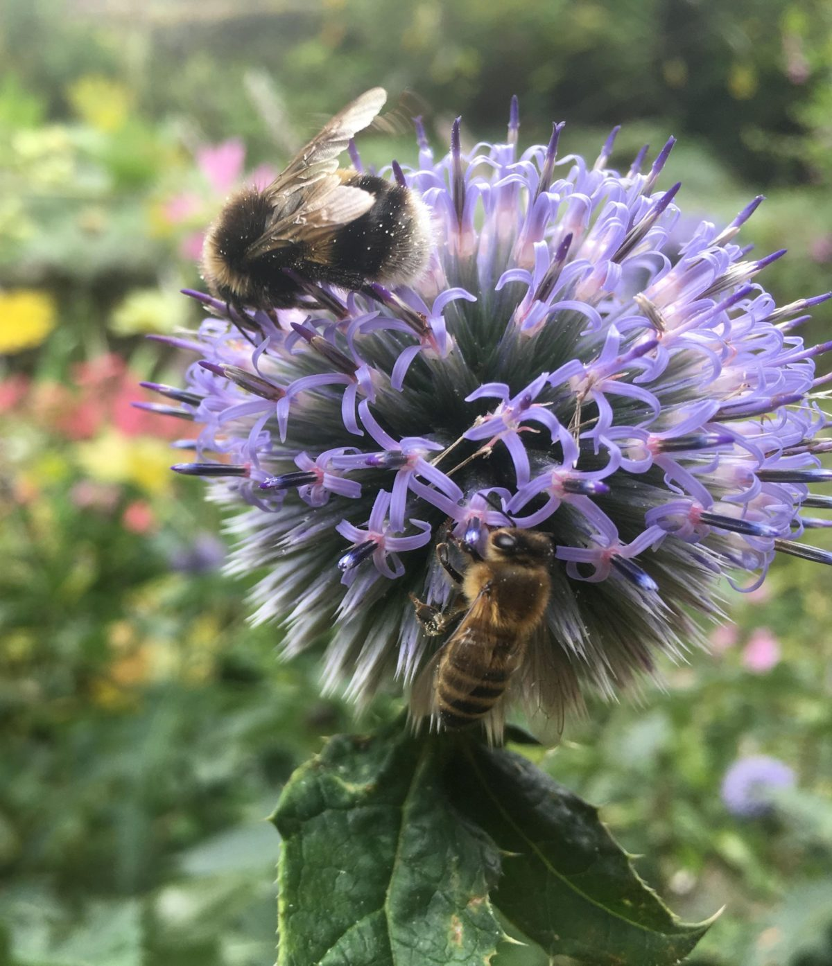 Busy bees in a Garden for Wellbeing
